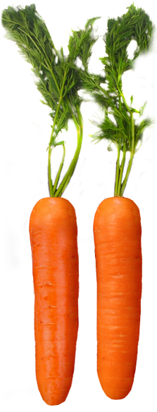 Harvest-Fresh-Carrots.png